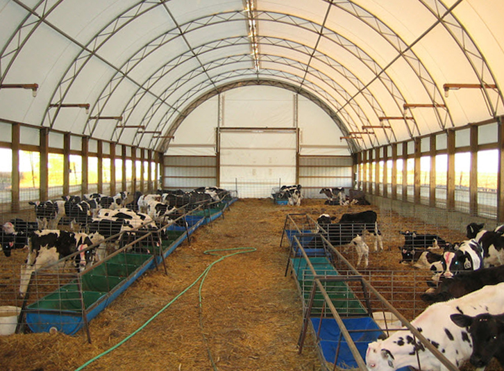 Cattle dairy livestock fabric covered buildings photos for Barn builders show